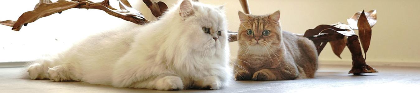 ジプシー&ヌネット